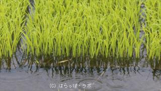 雨対策_02_480x270_wcr.jpg
