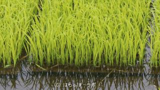 雨対策_03_480x270_wcr.jpg